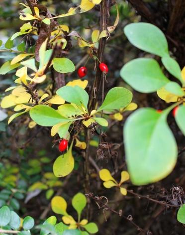 redberry1